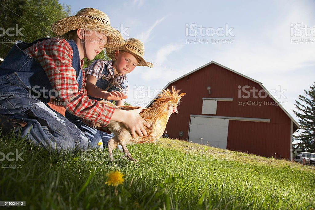 Two boys with chicken on farm stock photo