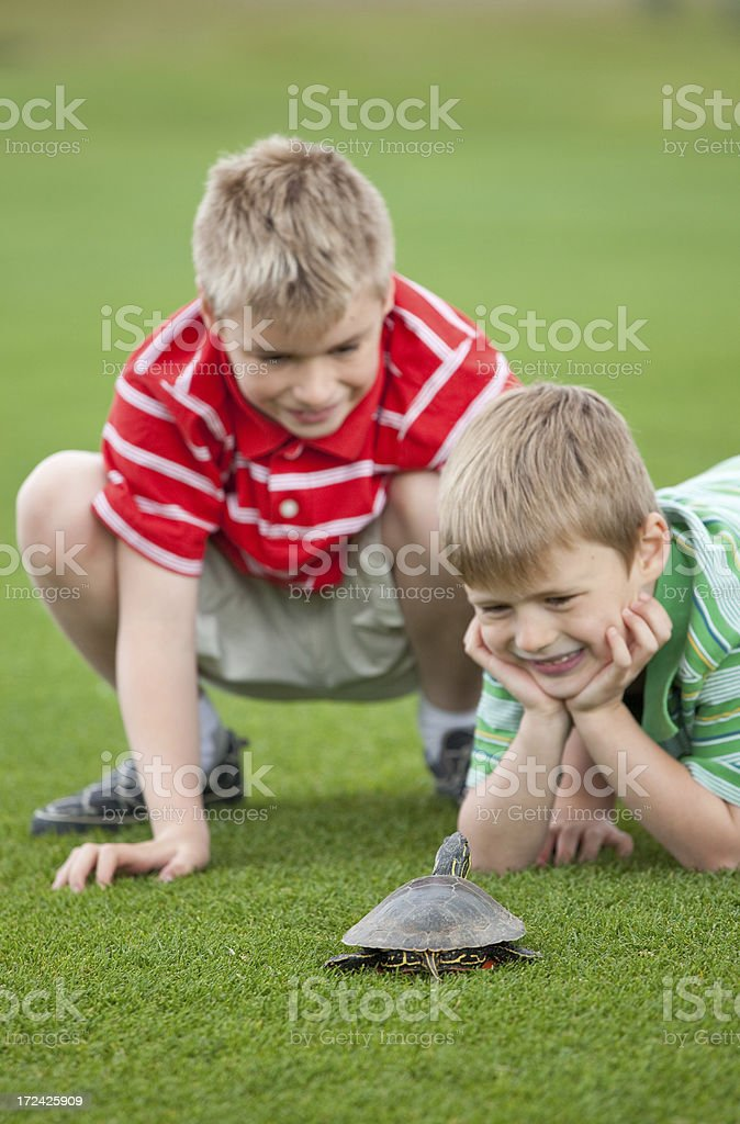 Two Boys with Turtle royalty-free stock photo