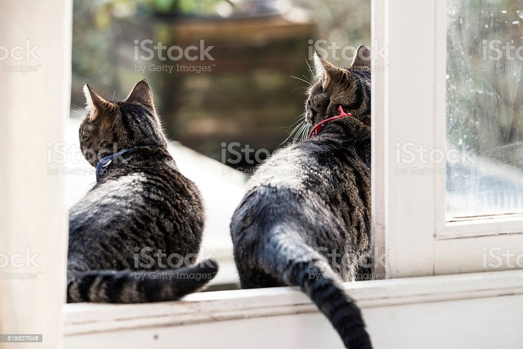 Two brother cats sitting in open door. Rear view. stock photo