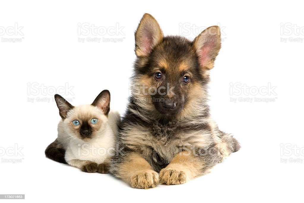 two buddies royalty-free stock photo