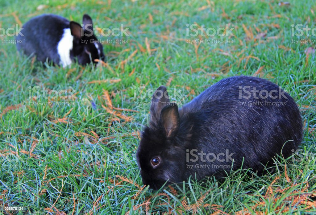 two bunnies in park of Vicenza stock photo