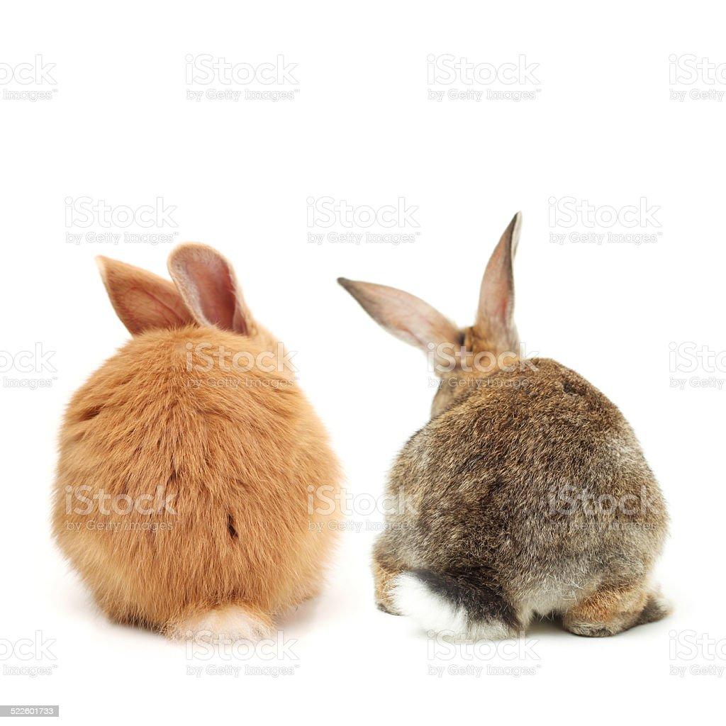 Two bunnies rear view shot stock photo