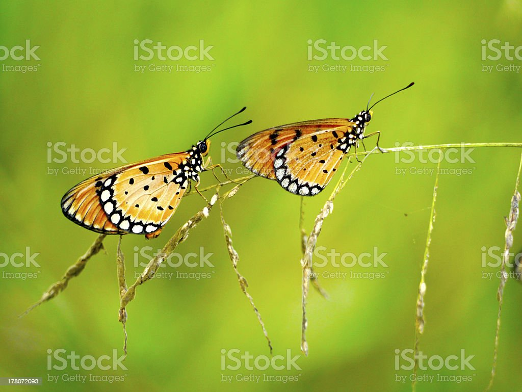 Two butterflies on grass. stock photo