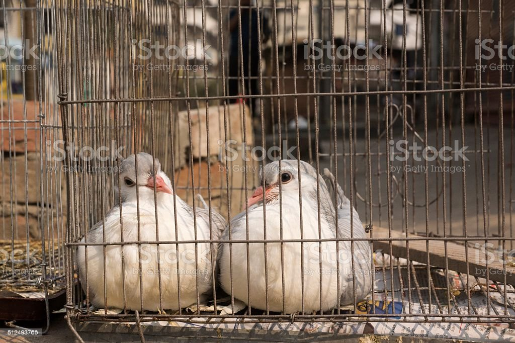 Two caged doves. stock photo