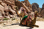 Two camels rests near caves. Summer vacation, eco tourism concept.