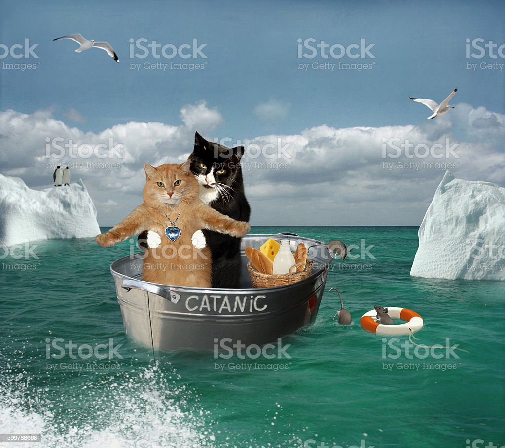 Two cats are traveling by a basin. stock photo