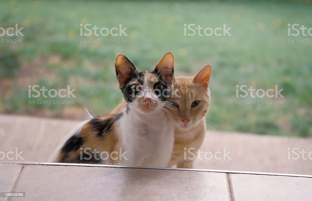 Two cats at my doorstep stock photo