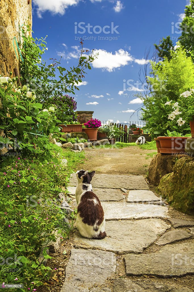 Two cats in ancient garden royalty-free stock photo