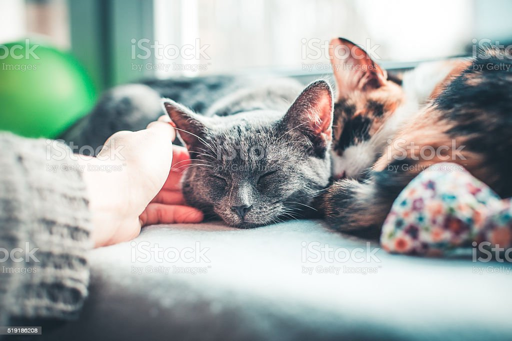 two cats lying comfortably on the window sill stock photo