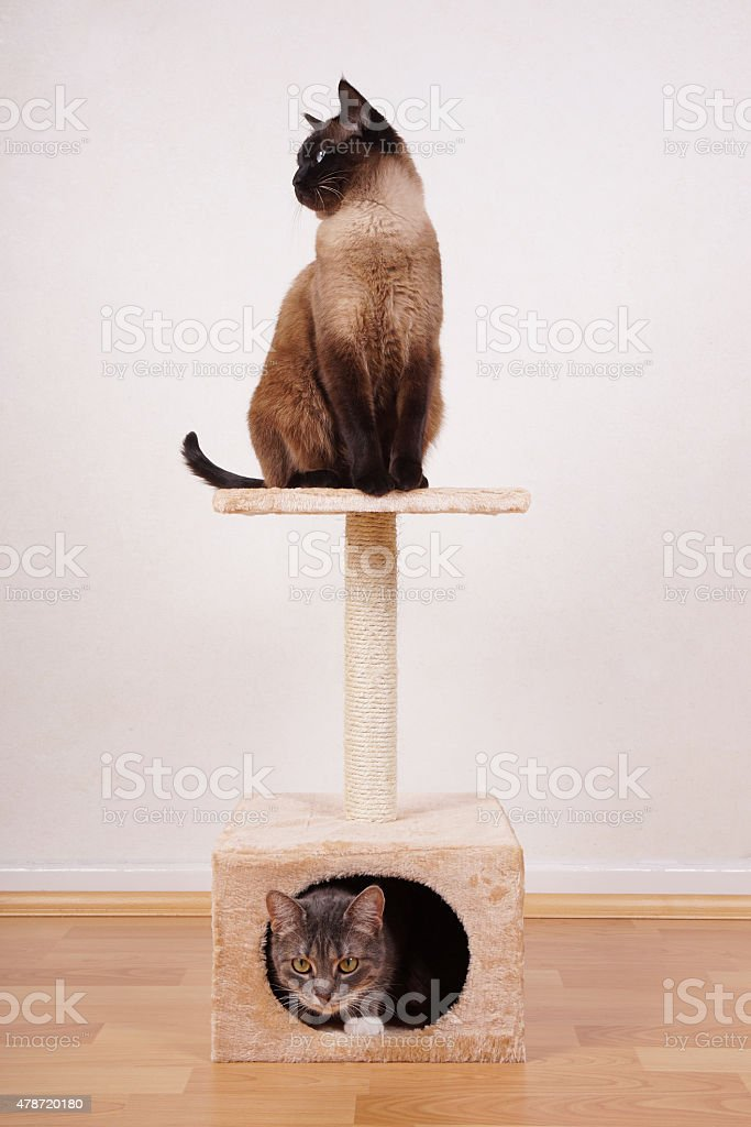 two cats on cat tree stock photo