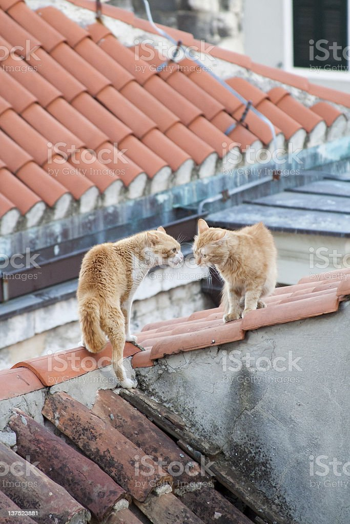 Two cats on the roof stock photo