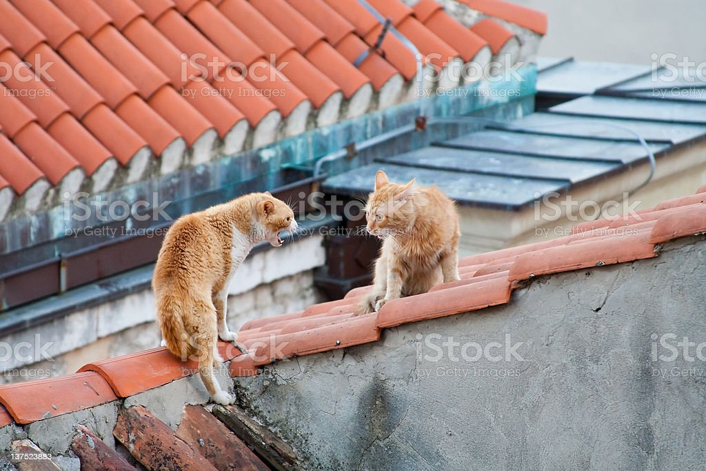 Two cats on the roof royalty-free stock photo