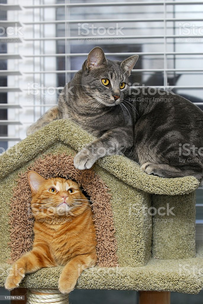 Two Cats One House stock photo