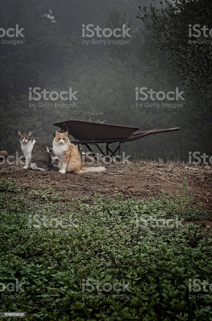 Two Cats Pose In Misty Outdoors Woods Forest stock photo
