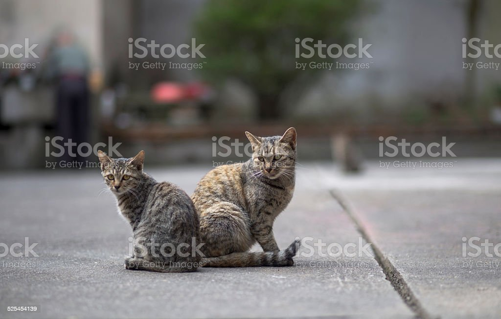 two cats sitting on the yard stock photo