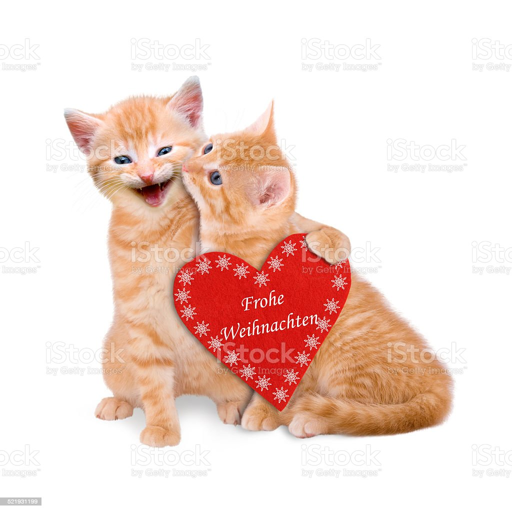 Two cats wishing Merry Christmas isolated stock photo