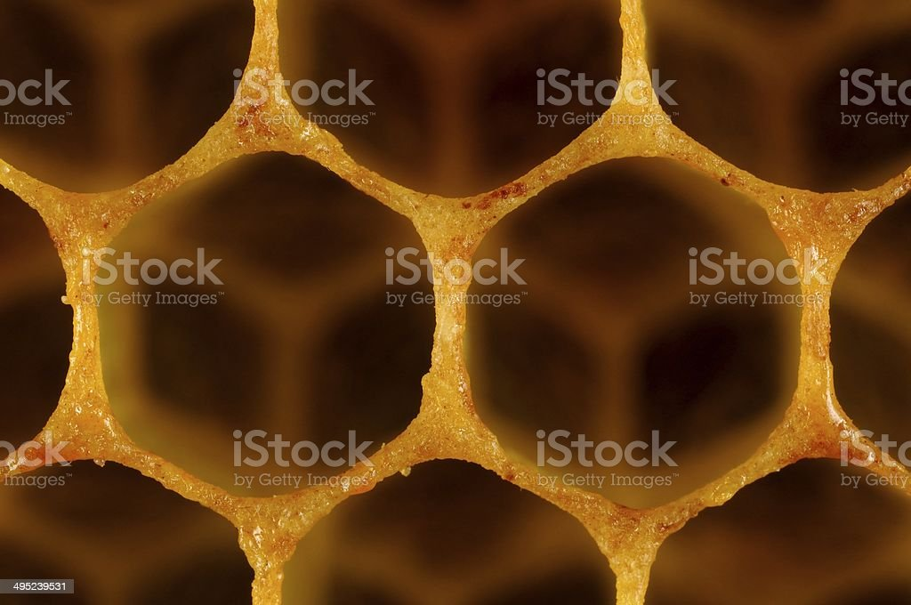 two cells of the honeycomb stock photo