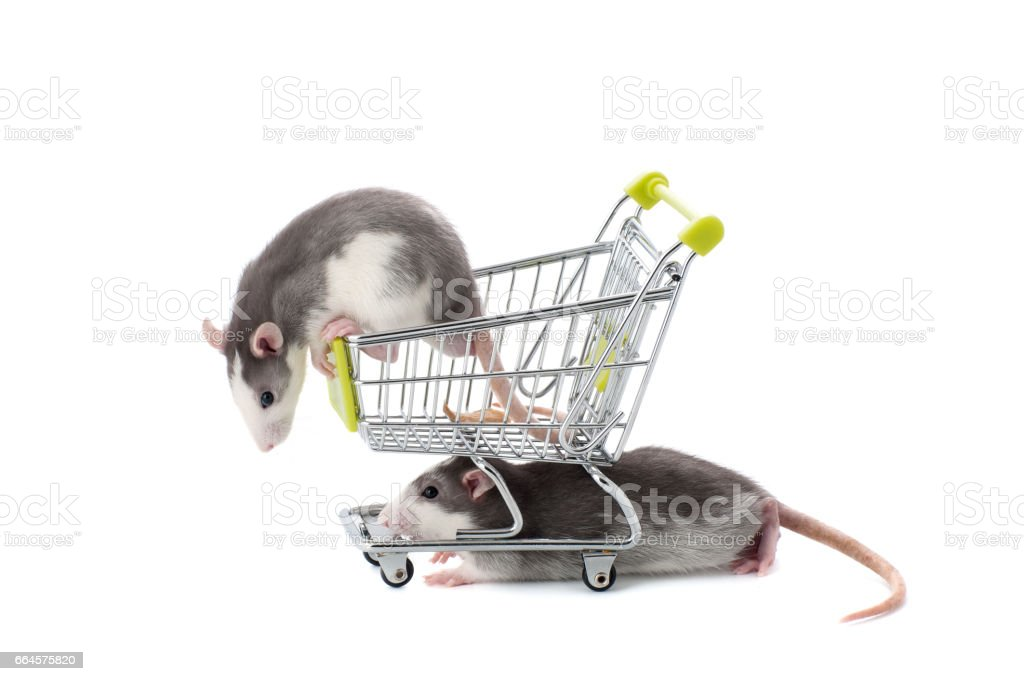 Two charming rats play with a cart of the buyer. stock photo
