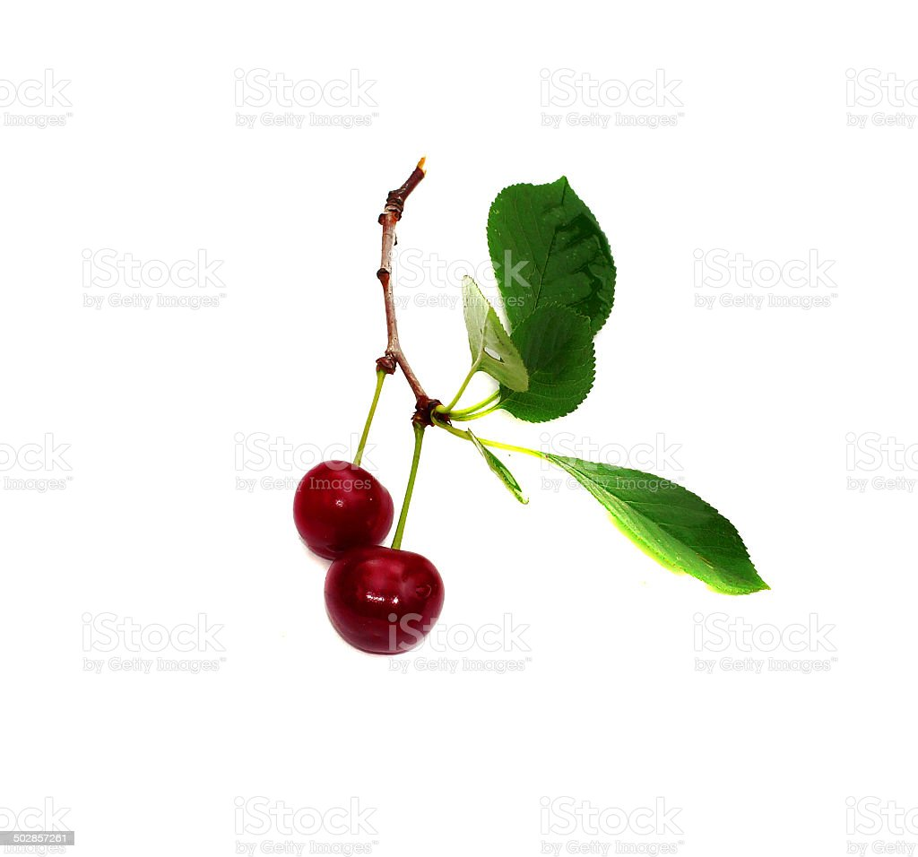 Two cherry on a leaf isolated royalty-free stock photo