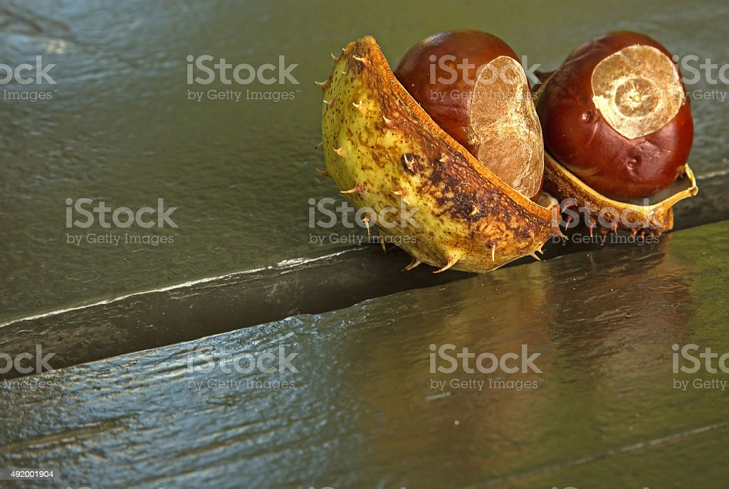 Two chestnuts with shell on a park bench in autumn.Horizontal. stock photo