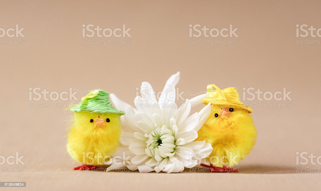 two chicks and a flower stock photo