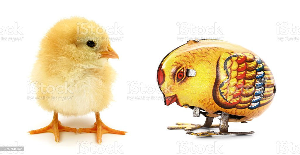 Two chicks one mechanical stock photo