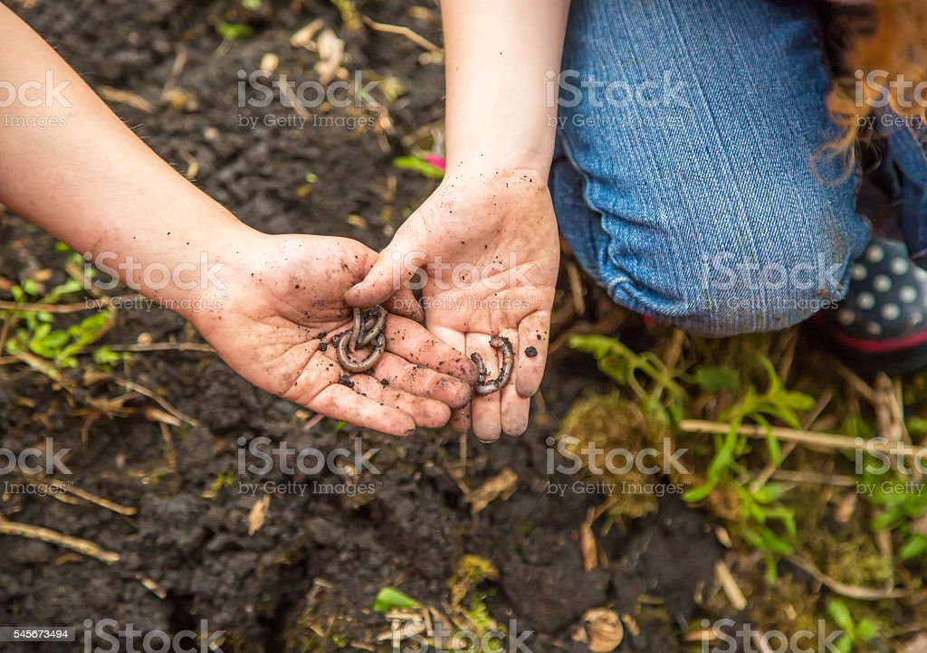 Two Children Holding Worms in Their Hands stock photo