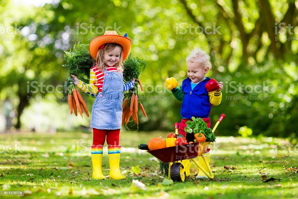 Two children picking vegetables on organic farm stock photo