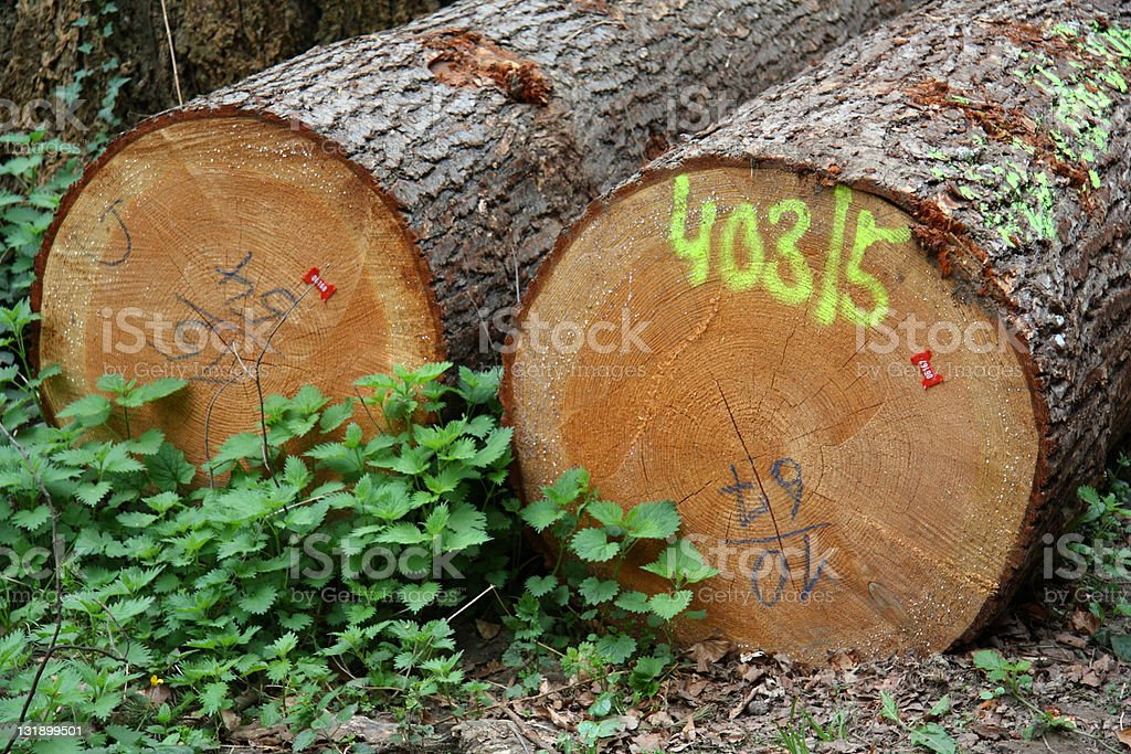 Two clades of wood stock photo