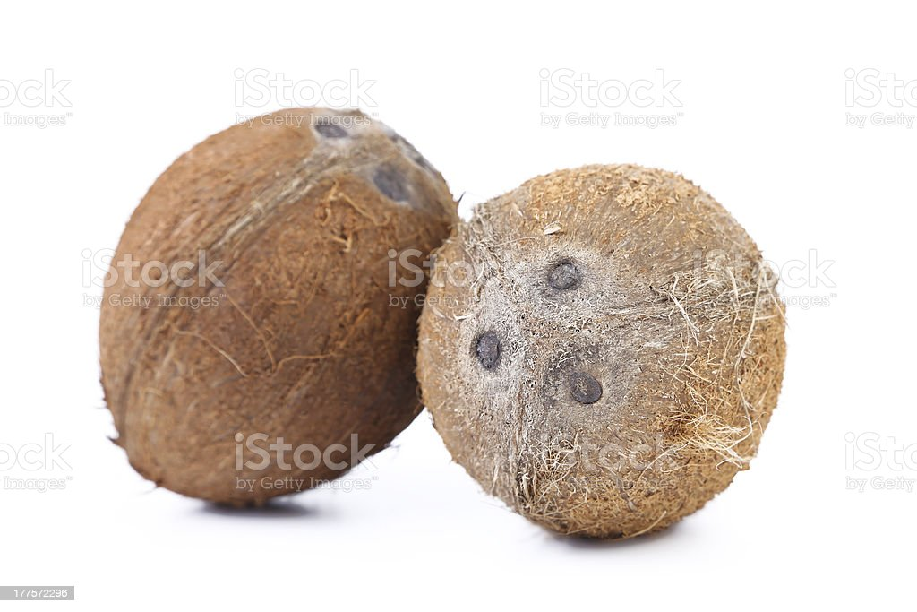 Two coconuts royalty-free stock photo