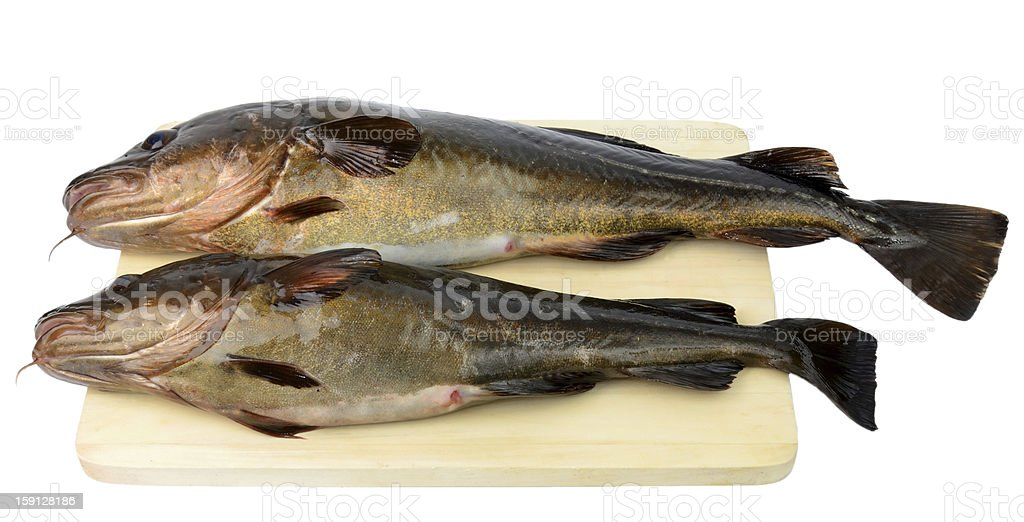 Two cod fishes for meal royalty-free stock photo