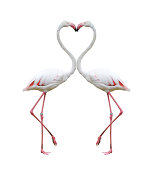 Two colorful flamingos building a hear