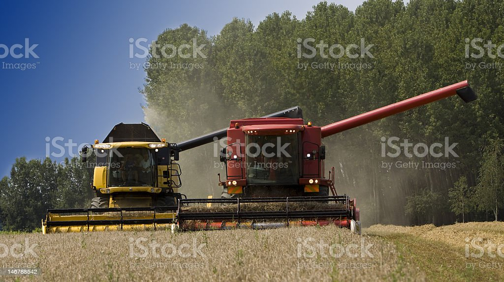 Two Combine Machine cut on Barley Field royalty-free stock photo