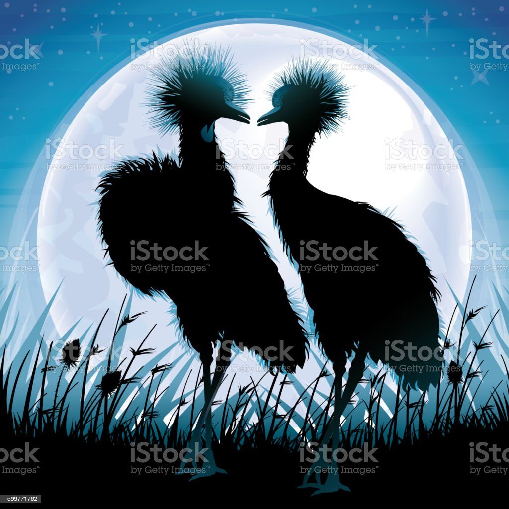 Two Crowned Cranes silhouettes safari in grass against blue moon stock photo