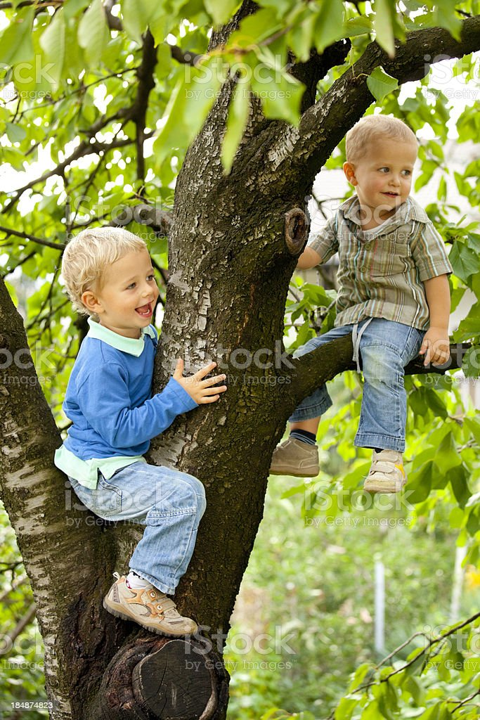 Two cute brothers sitting on a tree royalty-free stock photo