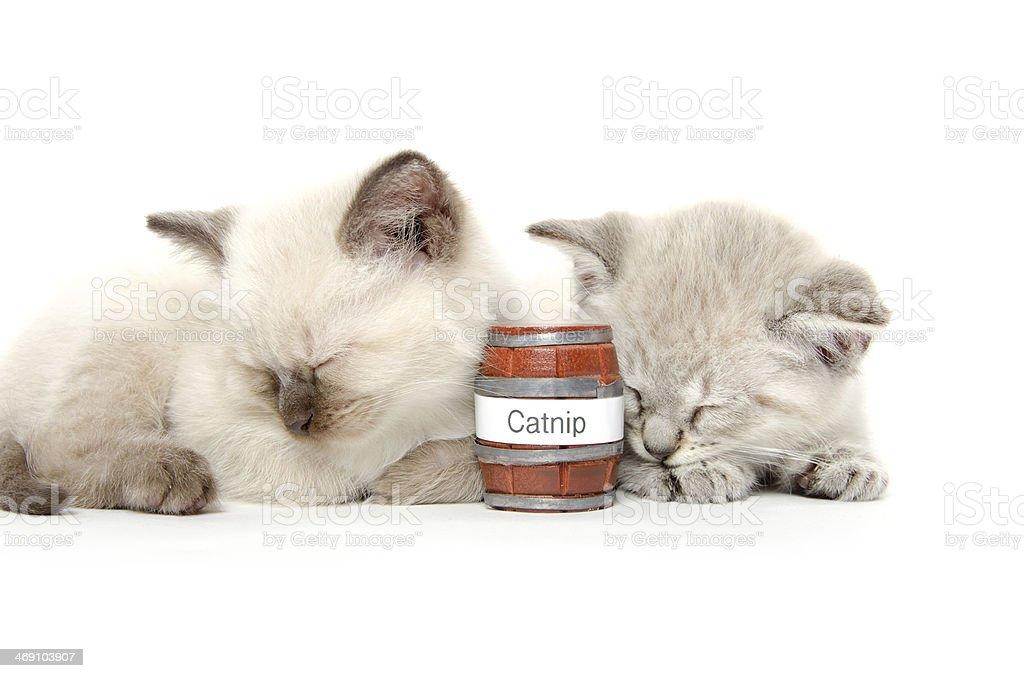 Two cute kittens sleeping stock photo