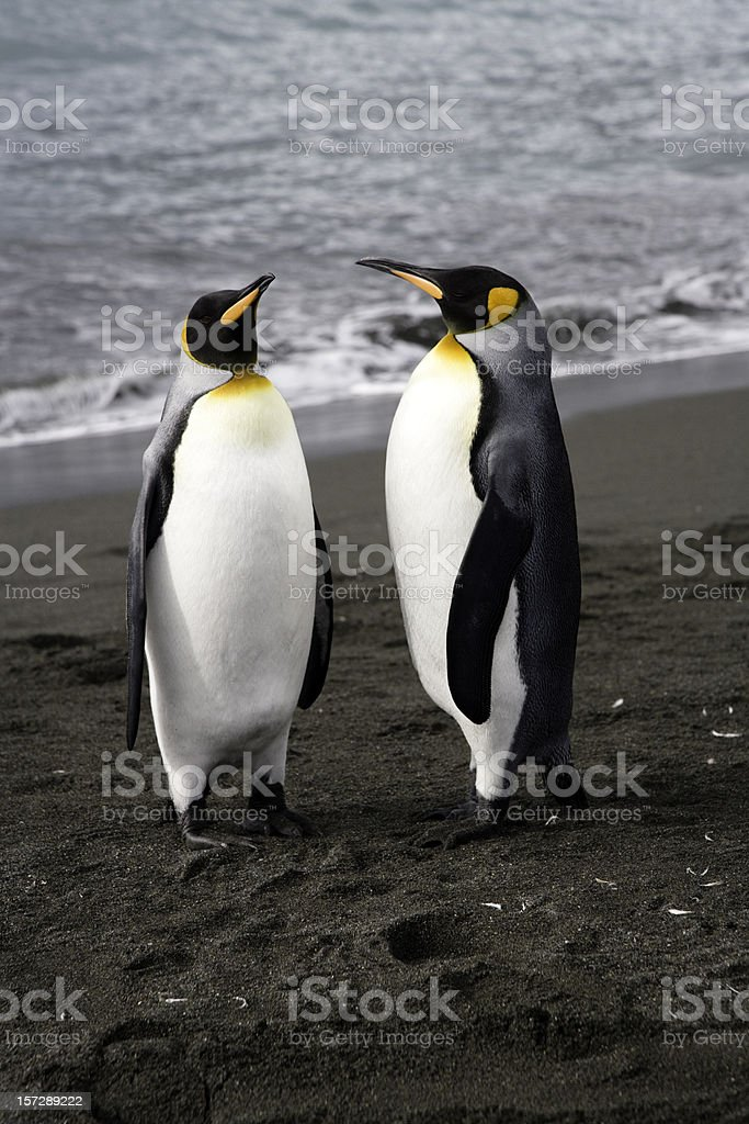 Two Cute Penguins royalty-free stock photo