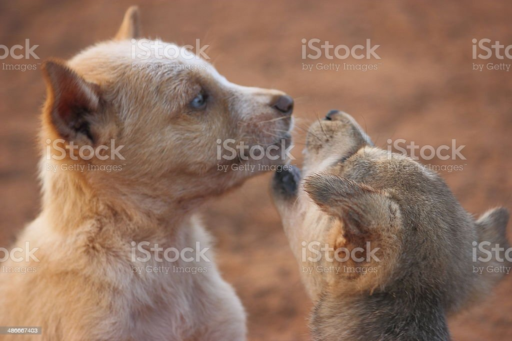 Two cute playing puppies stock photo