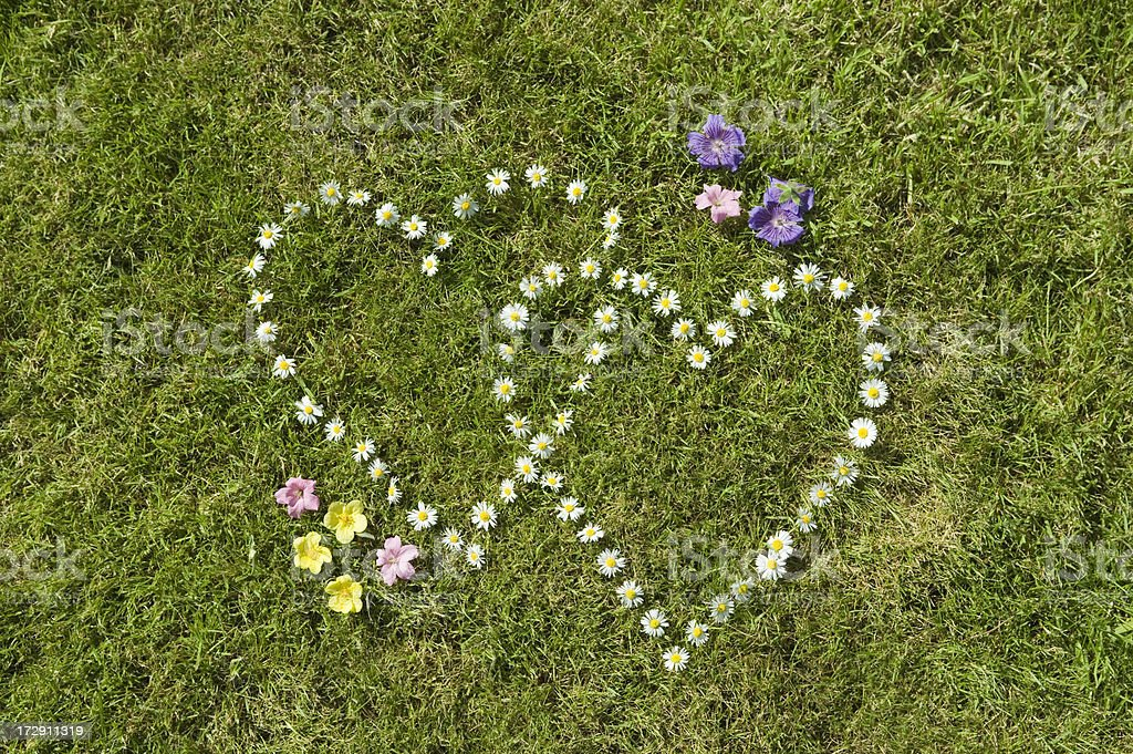 Two daisy hearts with wild flowers in grass #2 royalty-free stock photo