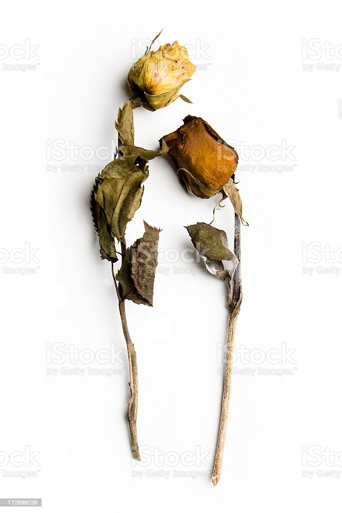 Two dead roses with dried flowers and leaves stock photo