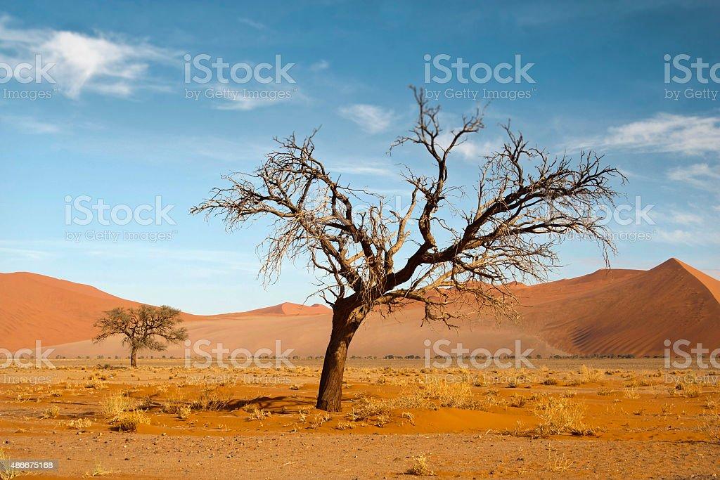 Two dead trees in the Namibian desert stock photo