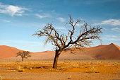 Two dead trees in the Namibian desert