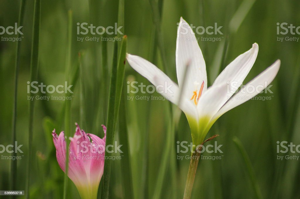 Two different flowers stock photo