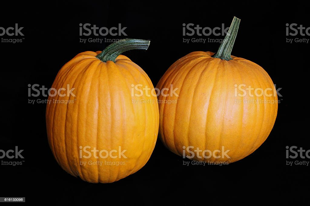 Two diffrent Pumpkins on Black stock photo