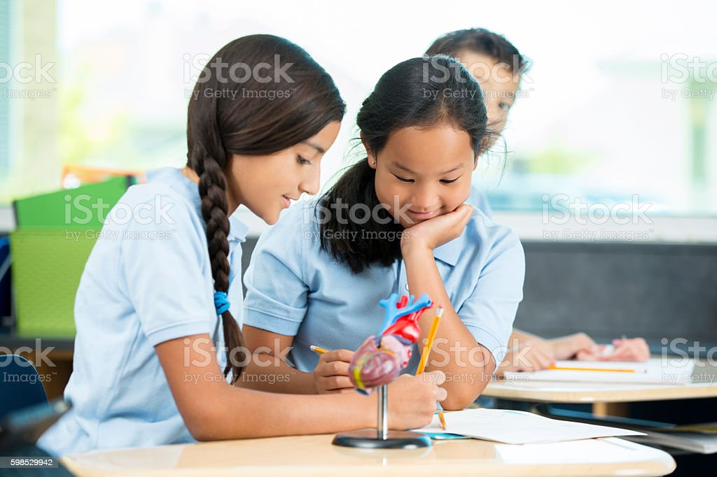 Two diverse students working together on a biology assignment stock photo