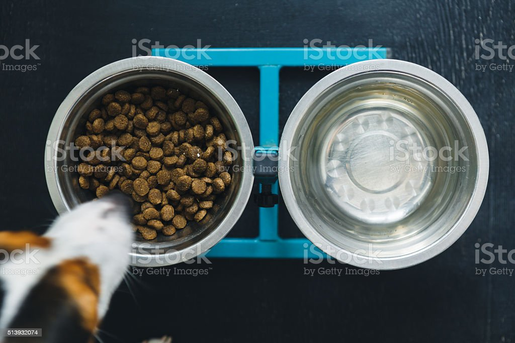 Two dog bowls stock photo