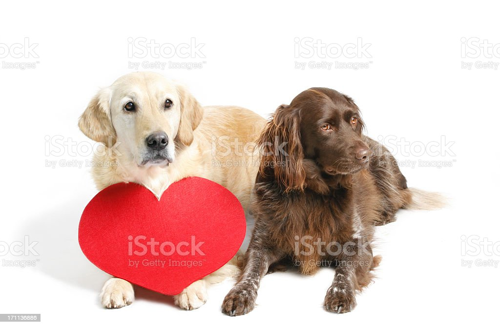 Two dogs and heart stock photo