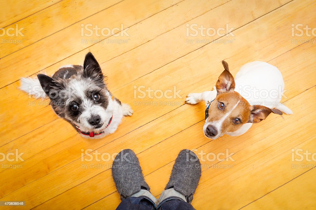 two dogs and ower at home stock photo