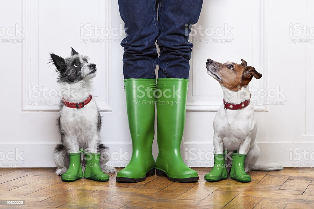 two dogs and owner stock photo
