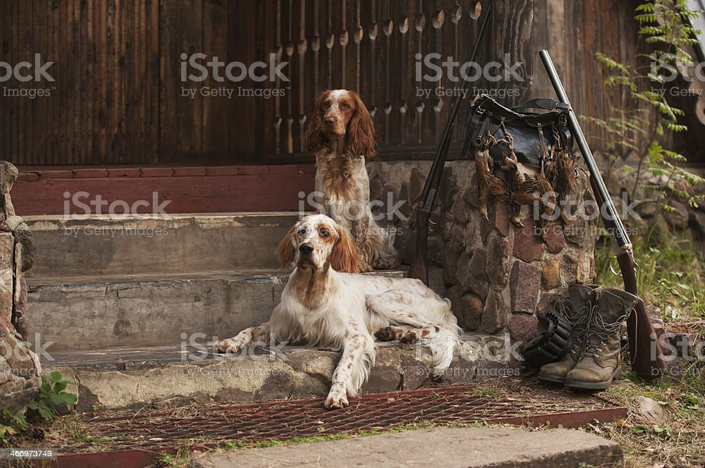 Two dogs and trophies stock photo